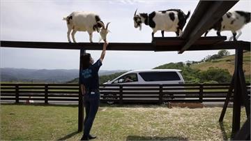防疫不放鬆!日本農場推「動物得來速」療癒身心
