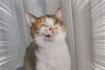微笑好難《貓的笑臉練習》為什麼貓牠看著我笑卻笑得我心裡發寒呢?......