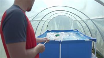 溫室變身訓練池!青少年女子游泳冠軍腰上綁繩索練習