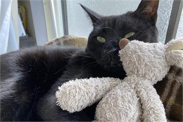新手貓奴《老公養貓的結果》當初誇下海口對貓沒興趣的人結果變這樣...ww