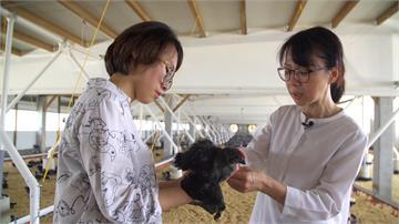 智能雞舍遠端監控 養出健康好雞好蛋|寶島樂田誌