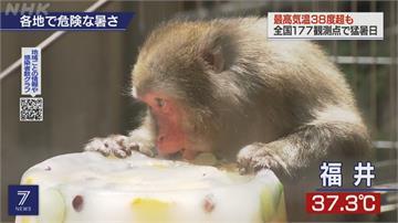 日本極端高溫熱到發紫 群馬縣飆出40.5度高溫