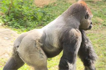 台北動物園擬增休園天數 邀全民一起來投票