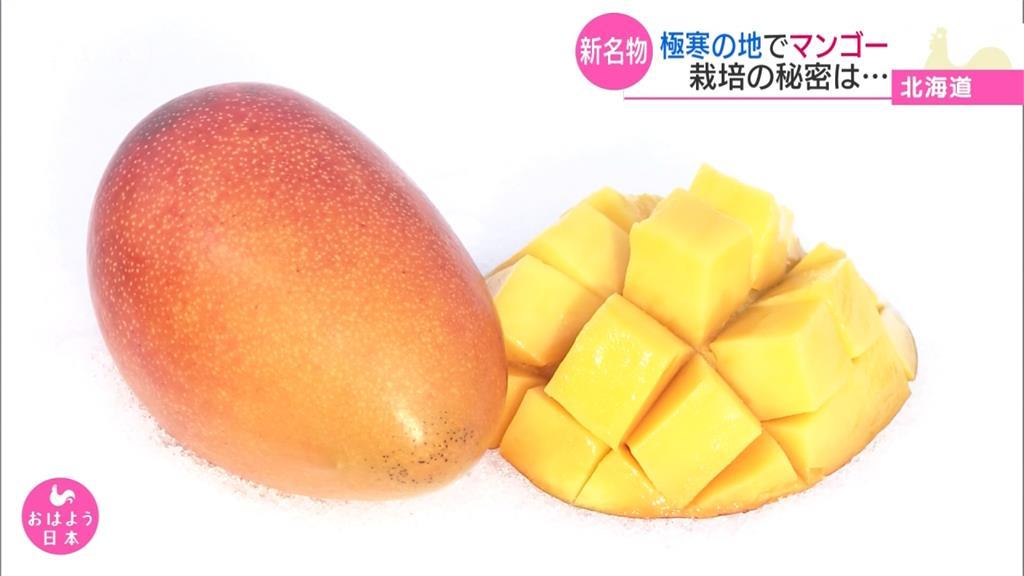 北海道冬天產芒果 一顆賣5萬日圓