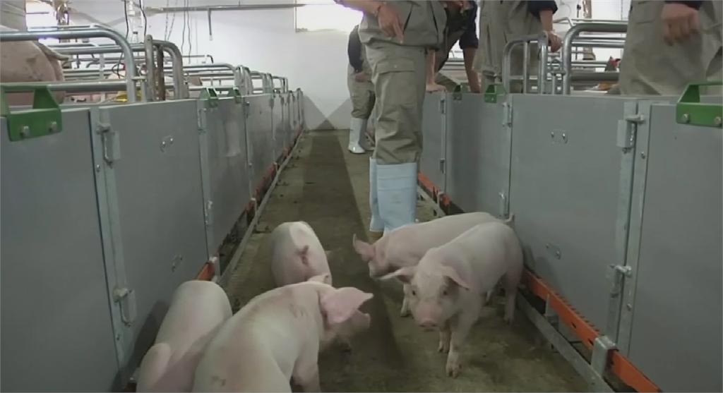 中國新型豬流感恐傳人 世衛將密切監測