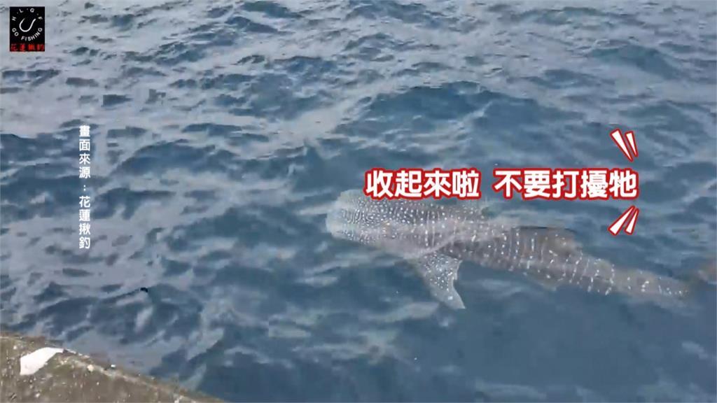豆腐鯊增列保育類 違法獵捕最重罰150萬