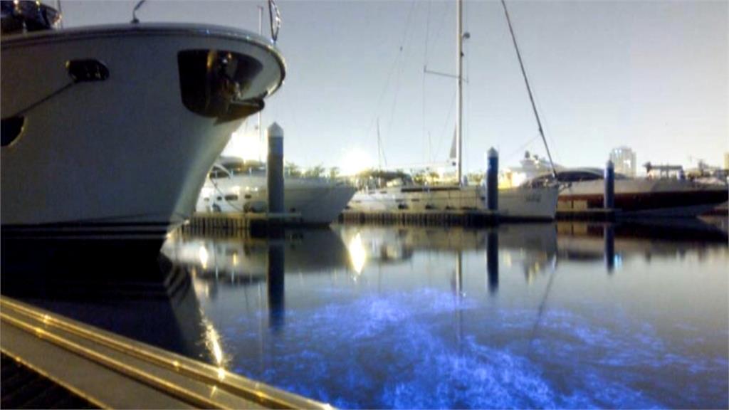台南安平也有藍眼淚!遊艇業者驚喜尖叫