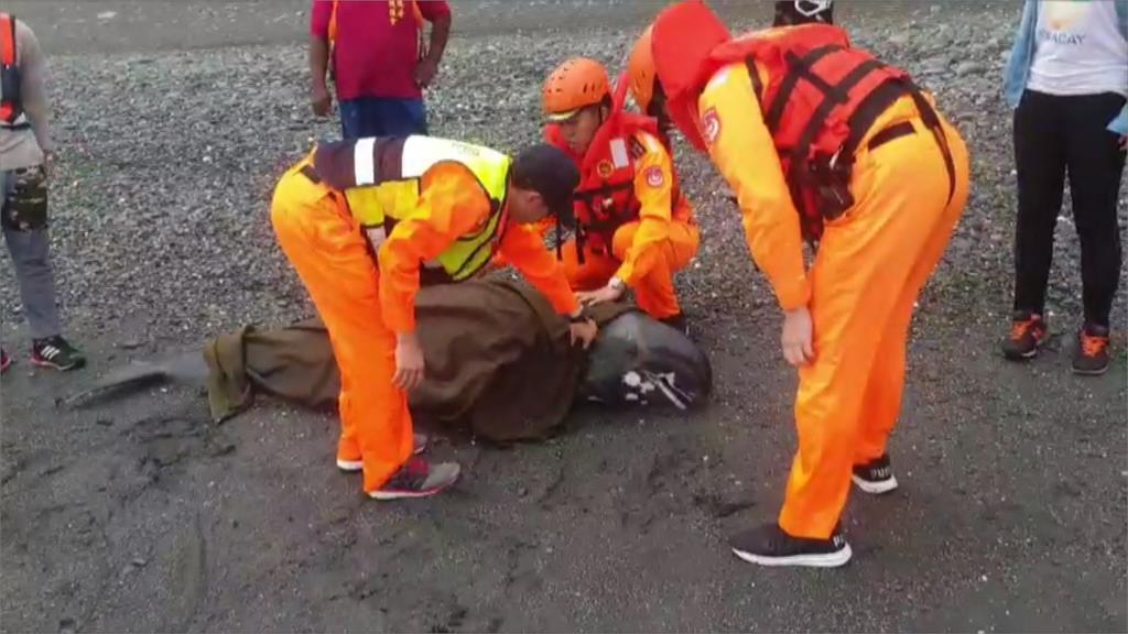 台東大竹海邊發現擱淺小虎鯨 死亡原因待查