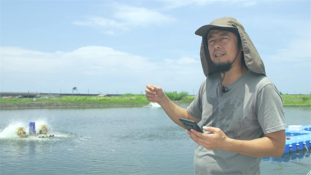 友善養殖台南虱目魚 創造大海物種多樣性 寶島樂田誌