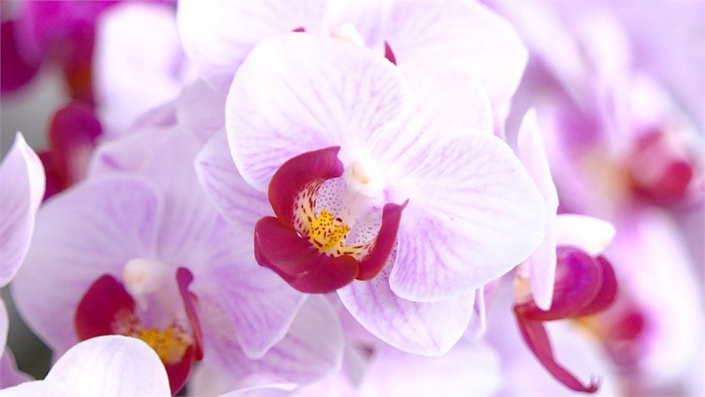 防疫期間賞花放鬆心情! 「花卉玻璃屋」進駐3大公園