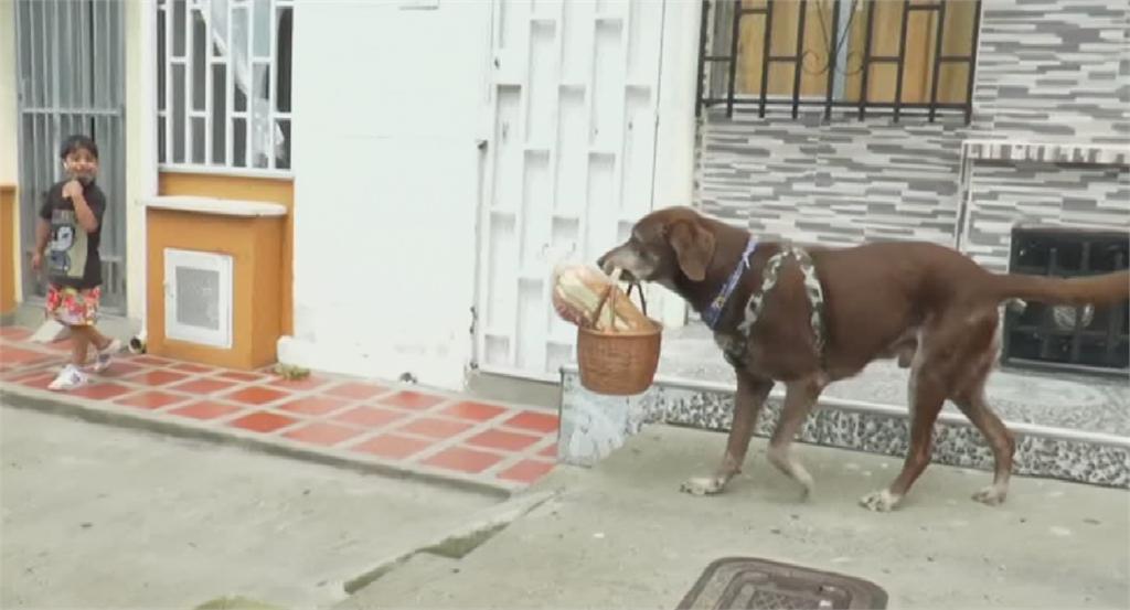 哥倫比亞加強防疫 便利商店派狗狗外送