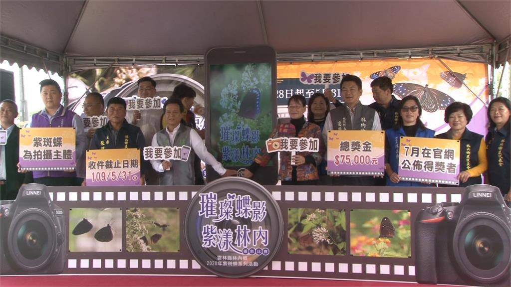 紫斑蝶預期爆量 林內紫斑蝶季改攝影比賽