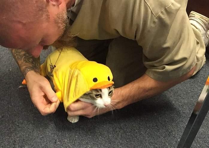 將貓咪引進監獄《改變受刑人的表情》現在他們看起來都懂了什麼叫愛...
