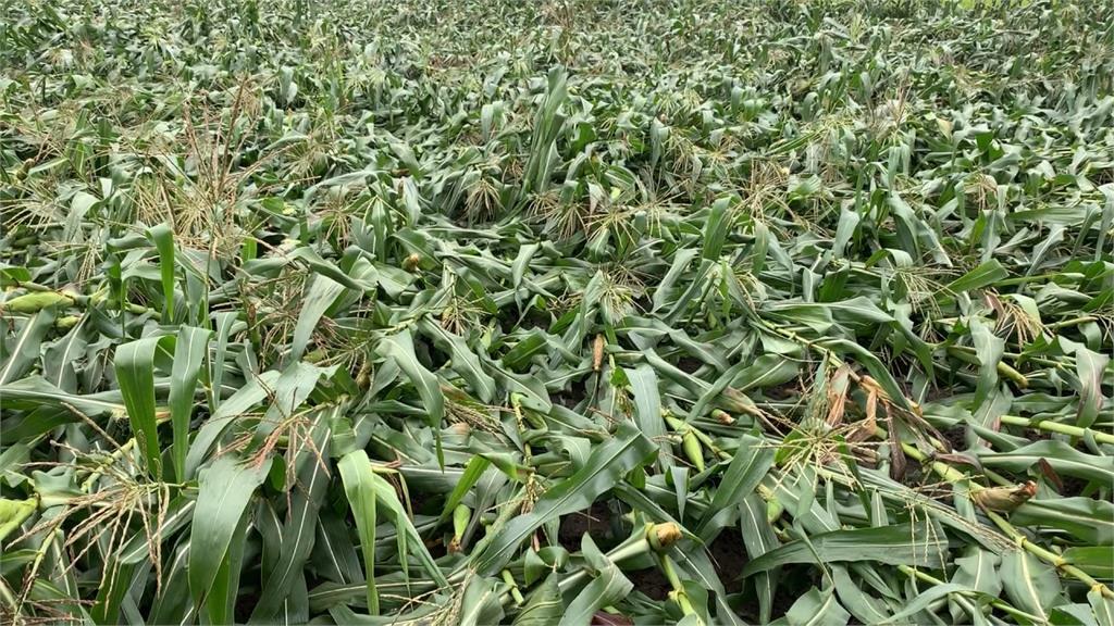 玉米、花生都泡爛!張麗善勘災聽農友訴苦