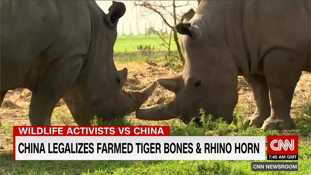 中國解禁犀牛角、虎骨買賣 全球保育團體震驚