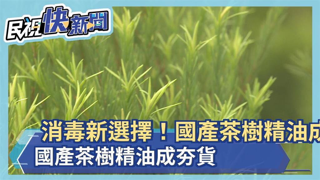 消毒新選擇!國產茶樹精油成夯貨