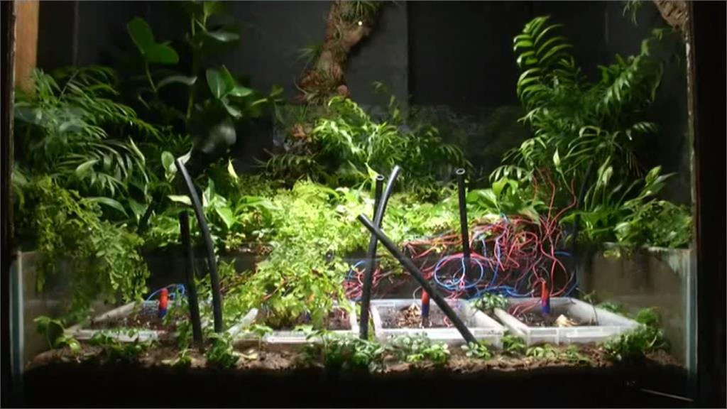 自己發電拍自己!全球第一張植物「自拍」照出爐