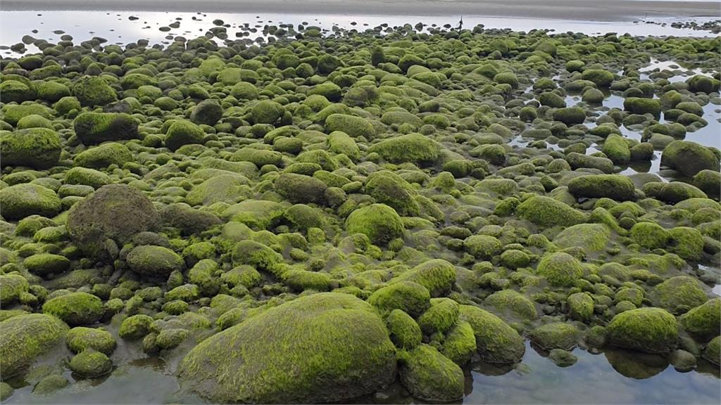 染上一層抹茶綠!苗栗「綠石槽」翠綠動人