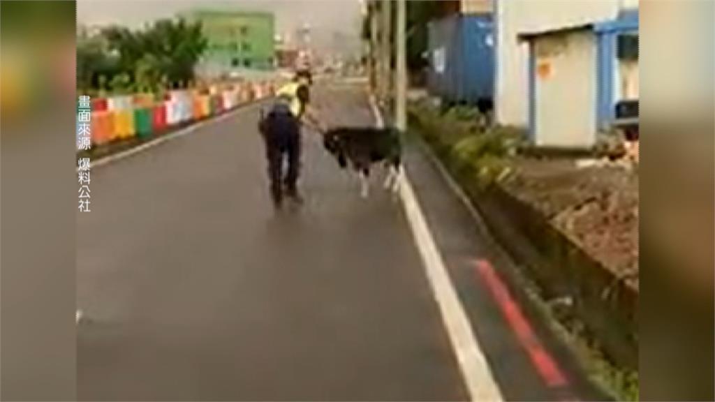 拒捕還衝撞員警!黑山羊趴趴走讓人手足無措