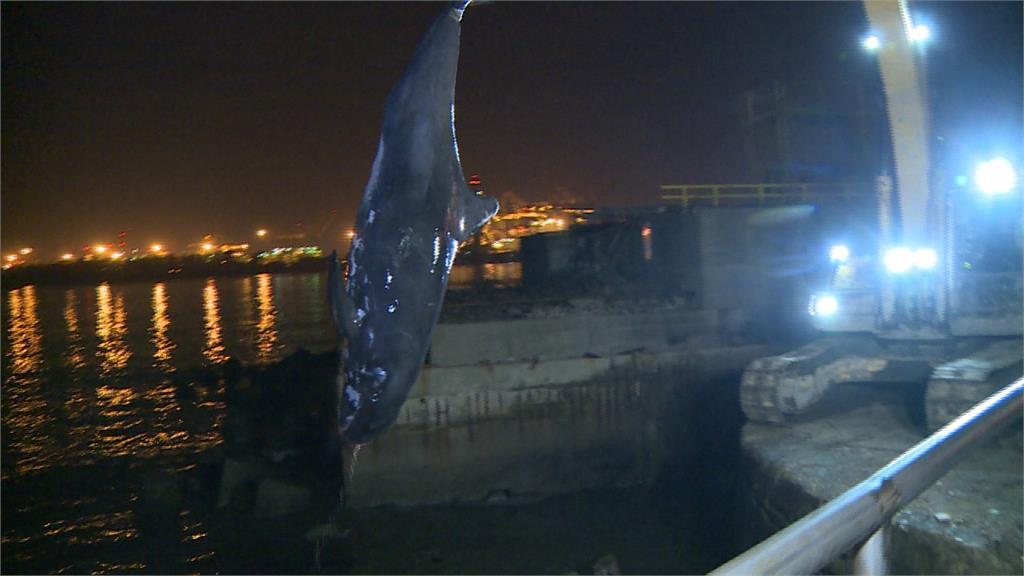 小虎鯨集體擱淺高雄港!3隻死亡、1隻受困消波塊