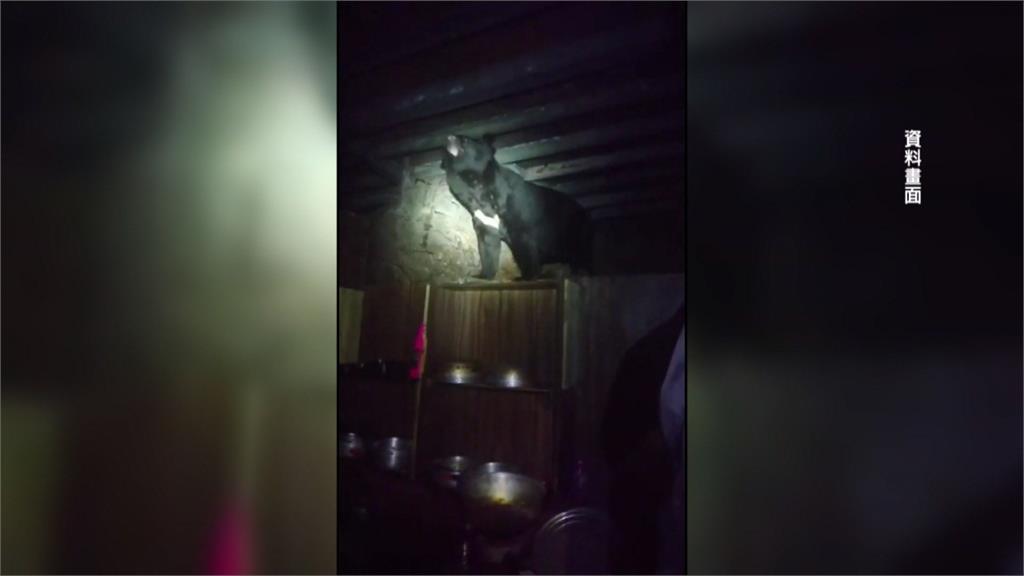 嘉明湖山屋封閉兩週重新開放 黑熊專家教你如何自保