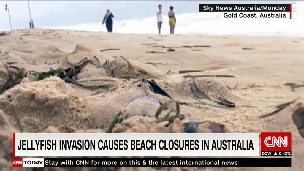 澳洲昆士蘭海岸水母入侵 逾3千人遭螫傷
