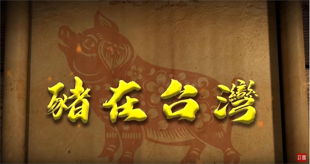 台灣演義/致富、祭典、餐桌全靠豬!台灣豬千年史|2019.07