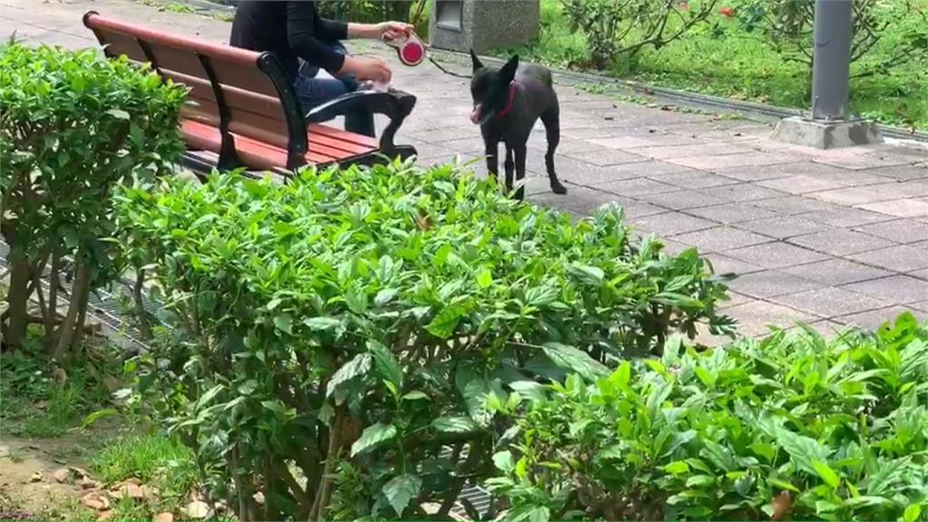 衰!只是到公園遛狗...男慘遭野狗咬掉鼻翼