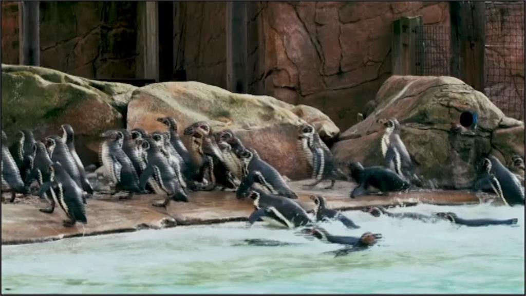 奮發賺取糧食費!動物園明星下海拍宣傳片募款