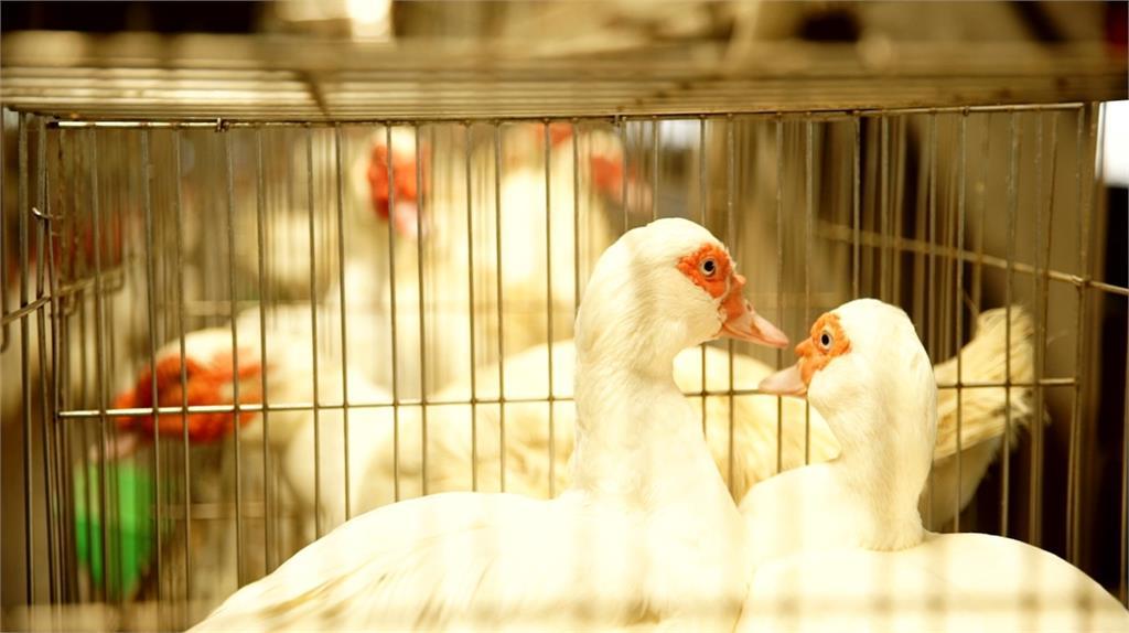 對抗疫情、危機化轉機! 農委會啟動紓困大作戰|田下大小事|EP2