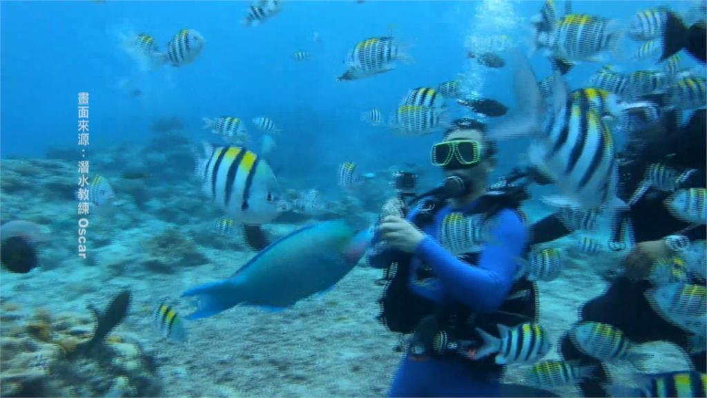 綠島潛水不見斑斕色彩 漁港工程造成「海底沙塵暴」