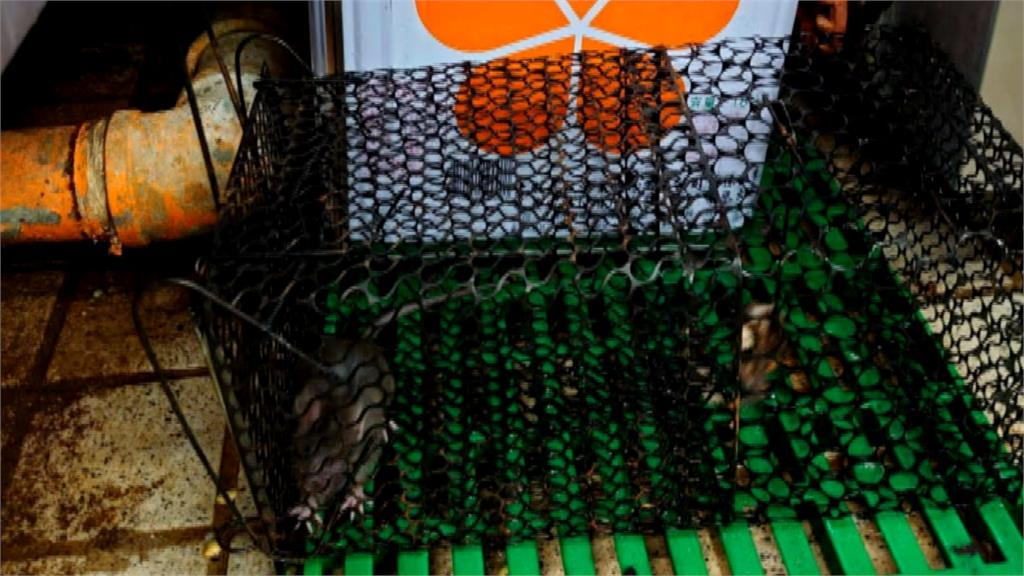 蟑螂老鼠逛大街、餐具亂丟樓梯間...台中林酒店遭爆「髒到令人絕望」