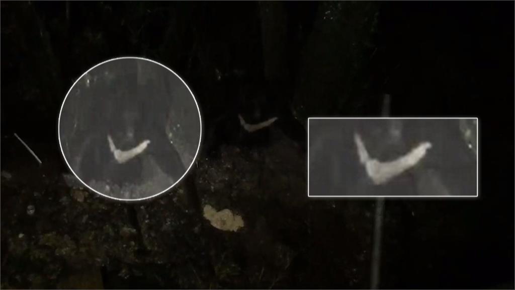 台灣黑熊接連現蹤花東 林管處:入山別留食物