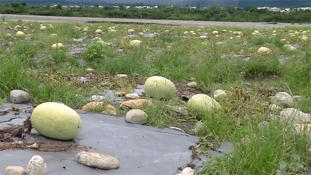 西瓜、高麗菜遭連日大雨泡爛 台東農民苦不堪言
