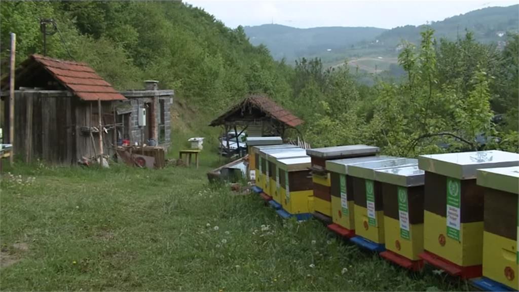 蜜蜂和野生昆蟲減少 全球暖化釀生態危機