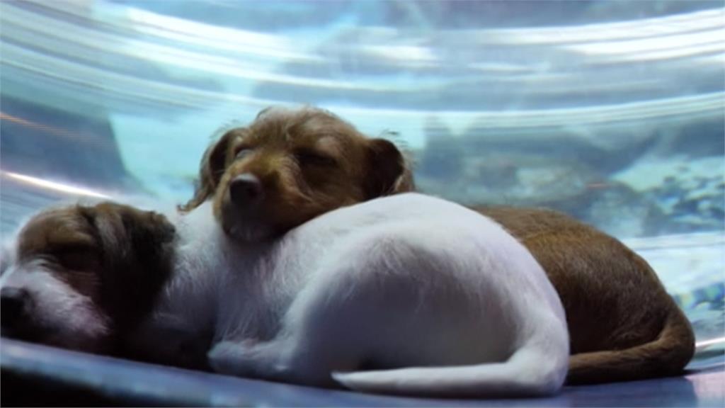 武漢肺炎/美國「軟封城」衝擊動物收容所!民眾暖心救浪浪