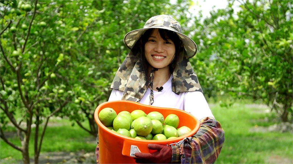 金牌農村與檸檬 以農之名的鹿野傳奇|寶島樂田誌