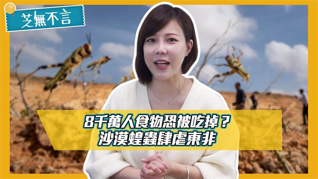 芝無不言/8千萬人食物恐被吃掉?沙漠蝗蟲肆虐東非