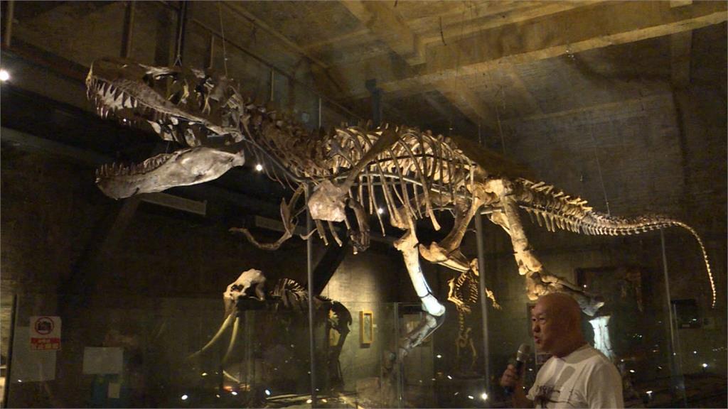 亞洲首隻暴龍化石 收藏家打造「瘋狂博物館」