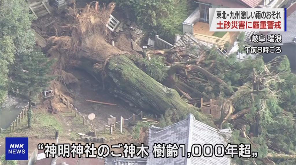 日本暴雨將持續至14號 岐阜千年神木不支倒塌