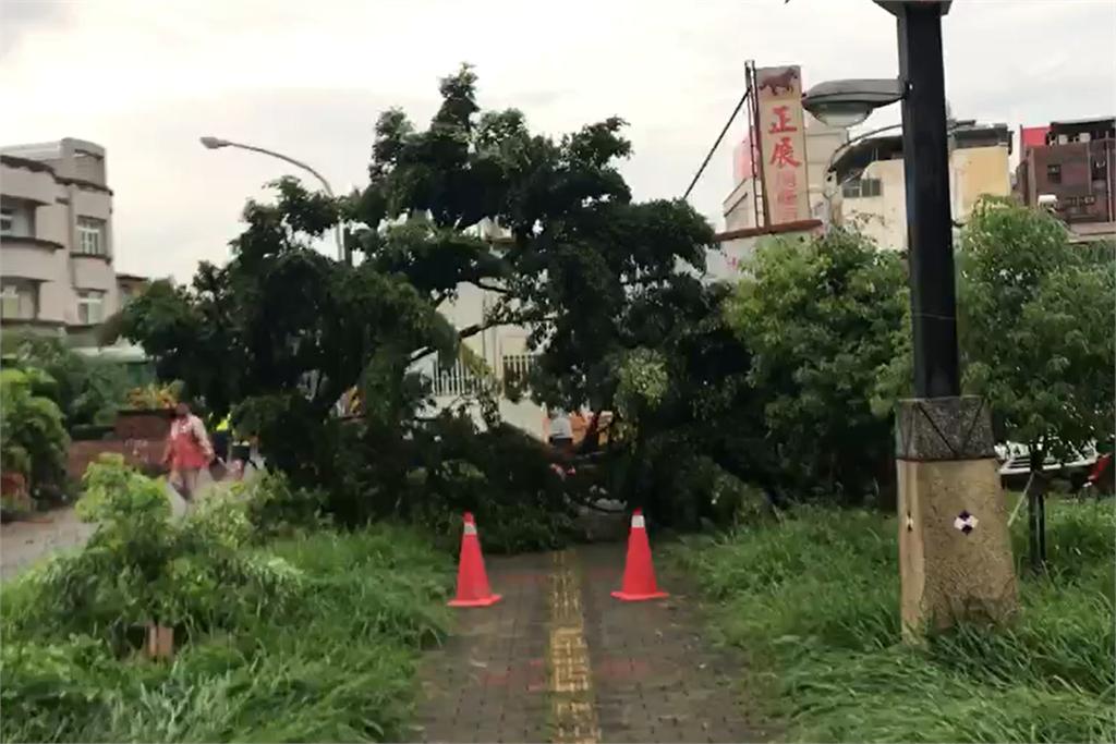 快新聞/屏東下午一陣大雨 「染病榕樹倒下」壓到轎車