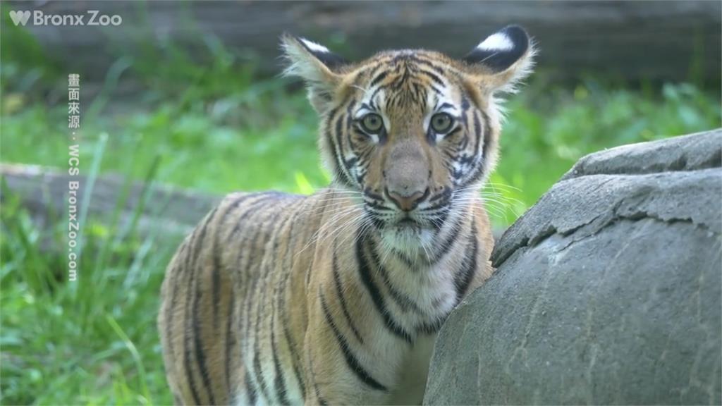無症狀保育員恐讓動物陷感染危機!木柵動物園嚴守防疫對策