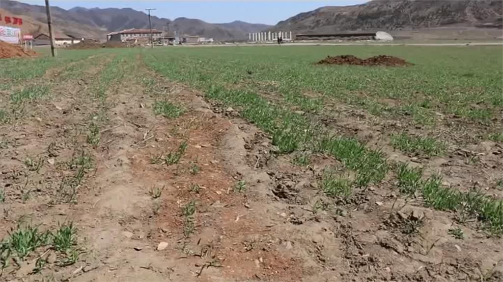 北朝鮮農作歉收陷斷糧危機!兒童、婦女首當其衝
