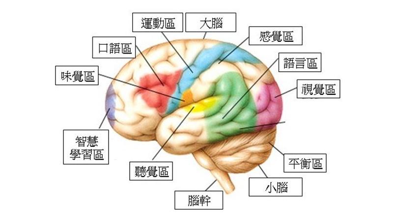 腦中風合併失語症 需把握治療時機