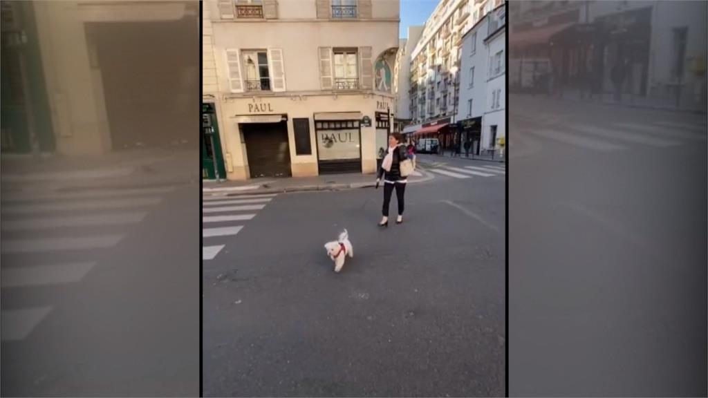 隔離不能出門但能遛狗!法國竟現出租毛小孩熱潮