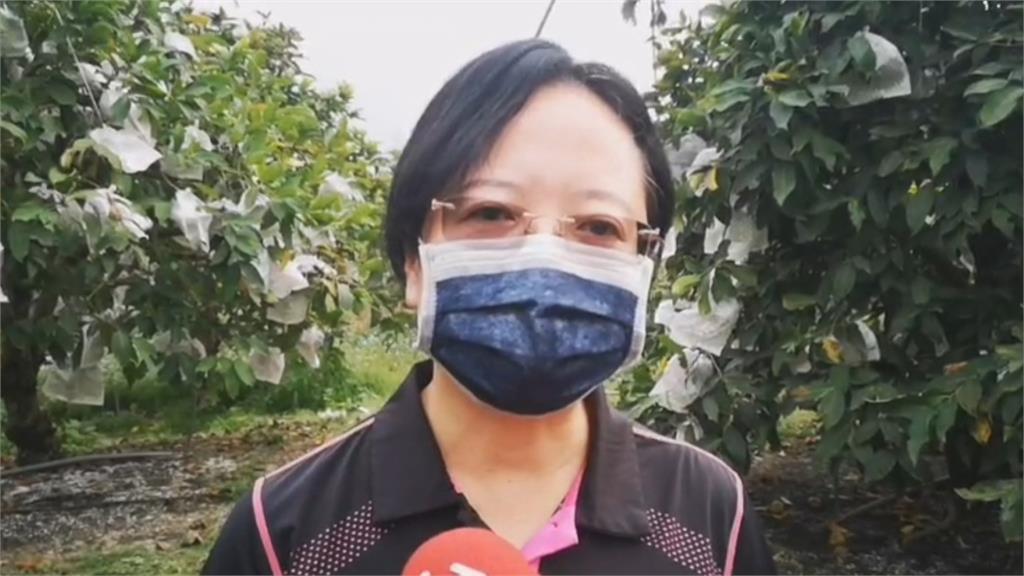 六龜蓮霧傳外銷中國喊卡 陳吉仲嚴正駁斥「不正確訊息」