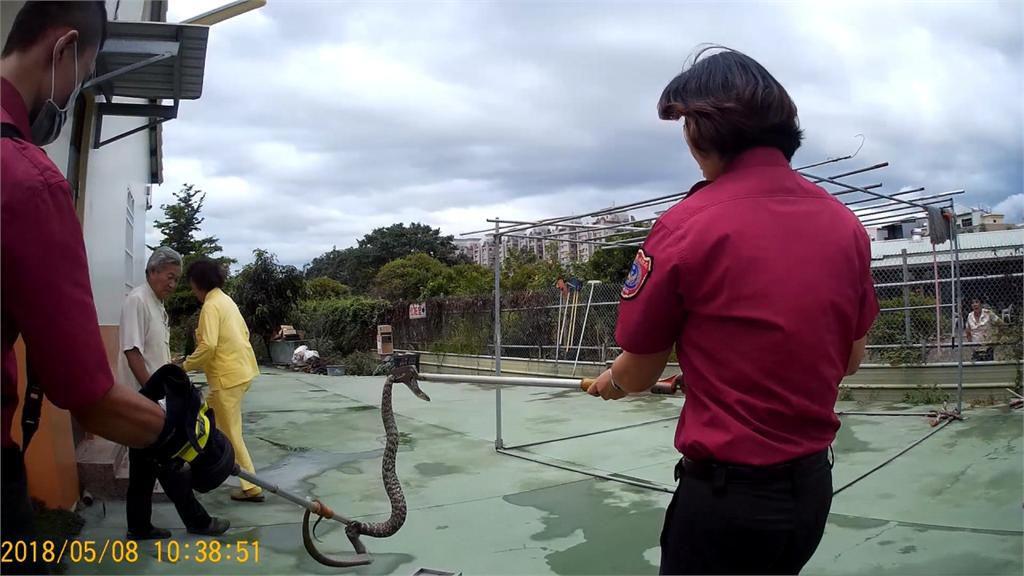 國際消防員日/工時過高!捕蜂捉蛇多於打火 揭密消防的勤務日常