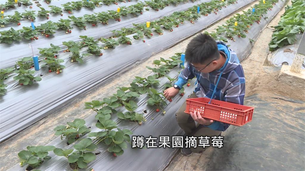 留美碩士回國種草莓 七年級青農獲百大青農