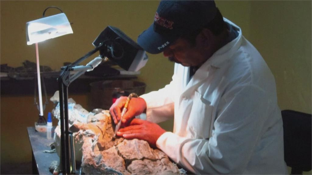 墨國7年研究結晶! 發現新品種「加羅氏字冠龍」