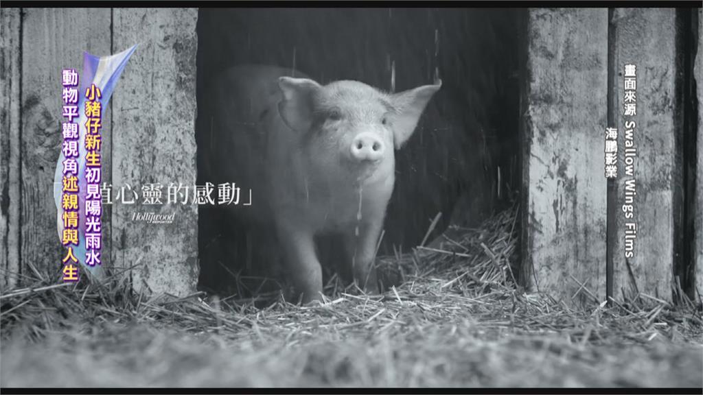 紀錄片「農場我的家」  極地冒險 動物視角看世界